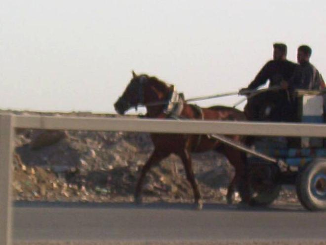 Photograph of a horse drawn wagon in Iraq. Photograph by an American soldier of C Co, 1/252 Army Reserve Battalion.